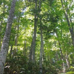上井達矢さん 仁美さんご夫妻・北竜町の山林で自伐型林業をスタート!