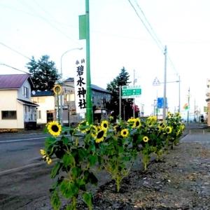北竜町では各地域で秋のお祭りが行われました。作物の豊作を願いお神輿や獅子舞も見られました【黒千石事業協同組合】