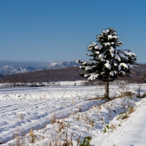 畑の端に佇むクリスマスツリー