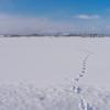 雪原の足跡