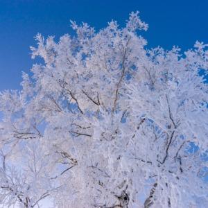 瑠璃色の空に煌めく白銀の樹氷