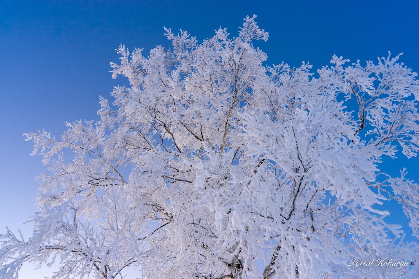煌めく樹氷